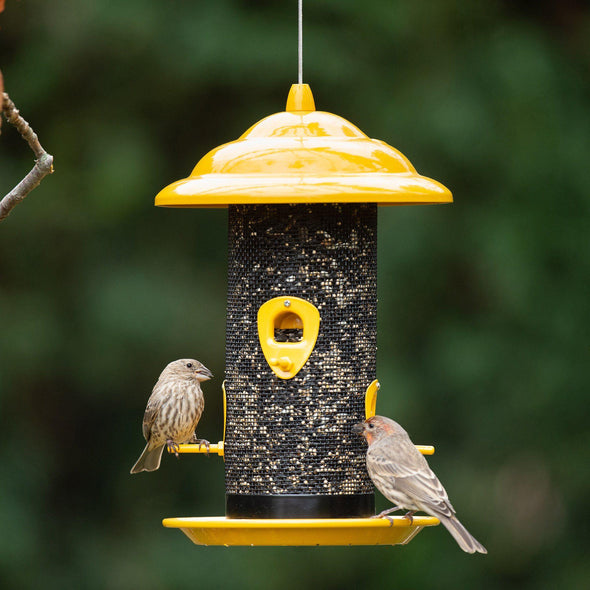 house finches feeding from More Birds® Yellow Sedona Sunflower Screen Bird Feeder