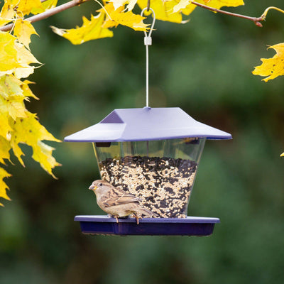More Birds® Ranch Hopper Sunflower Bird Feeder, 1.7 lb. Capacity