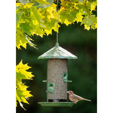 More Birds® Acorn Sunflower Screen Bird Feeder, 2.8 lb. capacity Bird Feeder More Birds