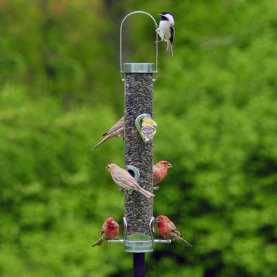 chickadee and finches on Droll Yankees A-6F Classic Bird Feeder for Sunflower Seed