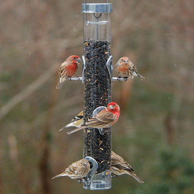 finches on Droll Yankees A-6RP Classic Sunflower Bird Feeder with Ring Pull Advantage