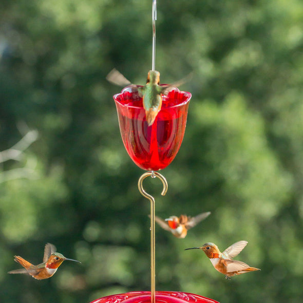 hummingbirds with Droll Yankees Ant Moat