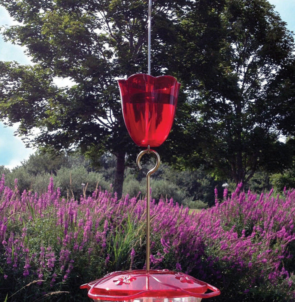 Droll Yankees Ant Moat attached to hummingbird feeder