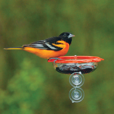 Droll Yankees® BO's Marmalade Window Oriole Feeder, 5 oz. capacity