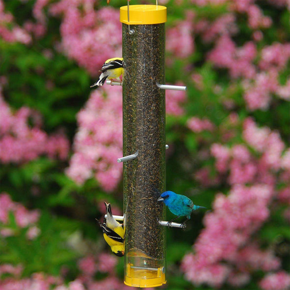 "goldfinches and indigo bunting on Droll Yankees Bottoms Up 16"" Finch Feeder"