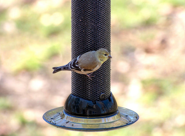 close-up of a goldfinch on the Droll Yankees Clever Clean finch magnet bird feeder