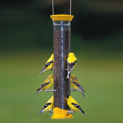 "goldfinches on Droll Yankees New Generation 15"" Finch Feeder"