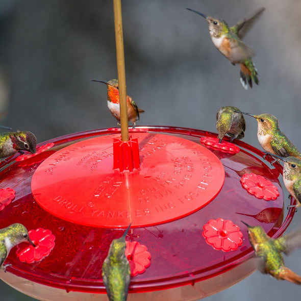 close-up of Droll Yankees Happy Eight 2 Hummingbird Feeder with hummingbirds