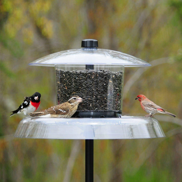 rose-breasted grosbeak, house sparrow and house finch on Droll Yankees Jagunda Squirrel-Proof Bird Feeder