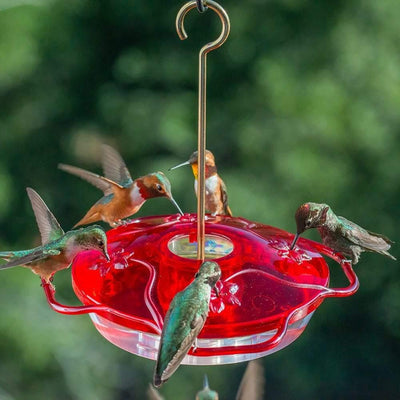 Droll Yankees® Little Flyer 4 Red Hummingbird Feeder, 10 oz. capacity, 7 in. diameter