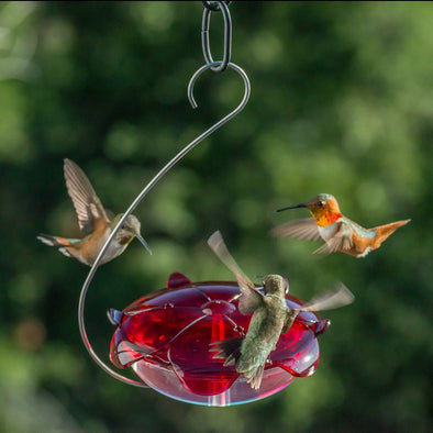Droll Yankees Ruby Sipper Hanging Hummingbird Feeder with hummingbirds