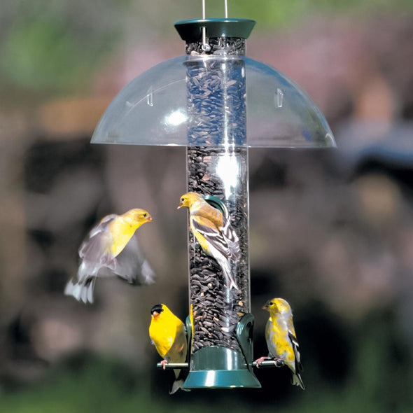 goldfinches feeding from bird feeder with Droll Yankees® Seattle Rain Guard installed