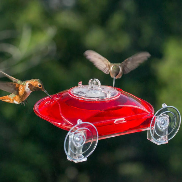 hummingbirds feeding from Droll Yankees Window Hummer 3 Hummingbird Feeder
