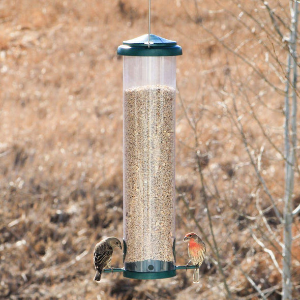 house finches eating from Squirrel-X by More Birds X7 Squirrel-Resistant Bird Feeder