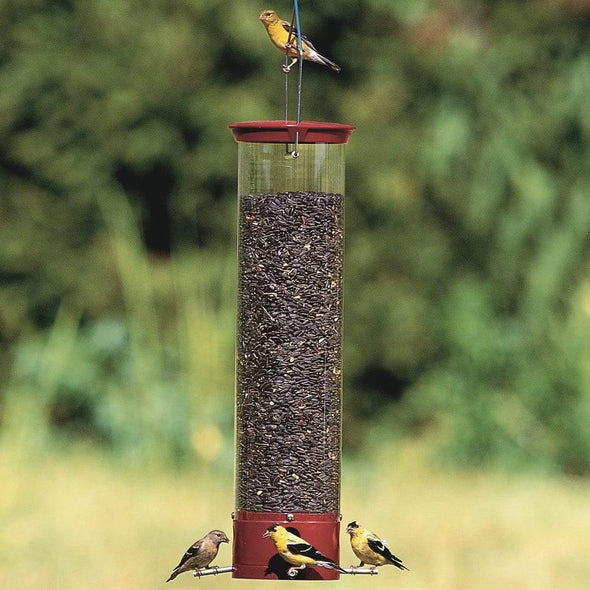 goldfinches eating from Droll Yankees Yankee Dipper Squirrel-Proof Bird Feeder
