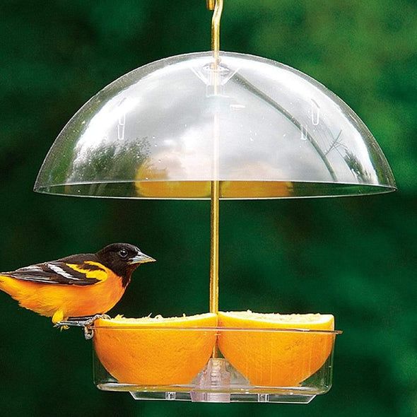 oriole eating oranges from Droll Yankees X-1 Seed Saver Bird Feeder