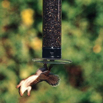 squirrel falling from Droll Yankees Yankee Tipper Squirrel-Proof Bird Feeder