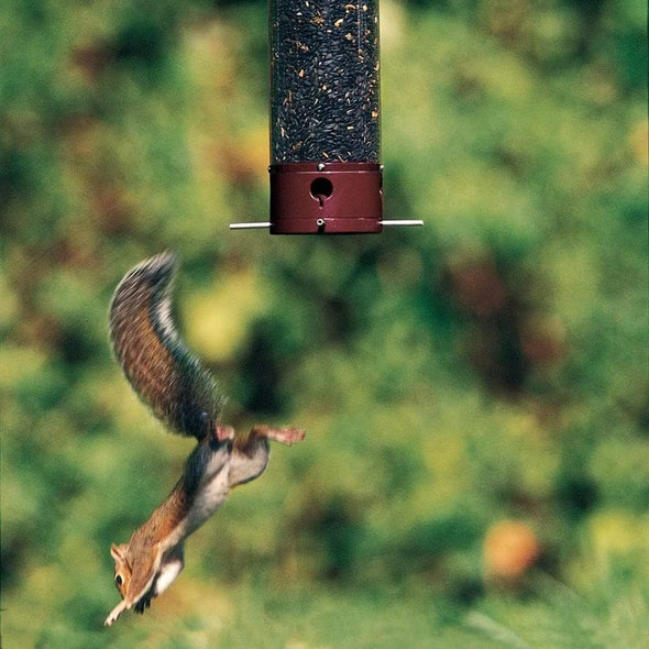 squirrel falling from Droll Yankees Yankee Dipper Squirrel-Proof Bird Feeder