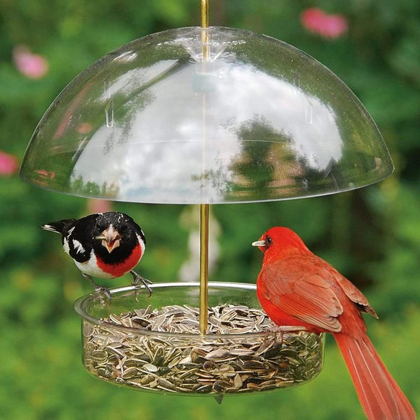 rose-breasted grosbeak and northern cardinal eating from Droll Yankees X-1 Seed Saver Bird Feeder