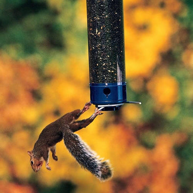 squirrel falling from Droll Yankees Yankee Whipper Squirrel-Proof Bird Feeder
