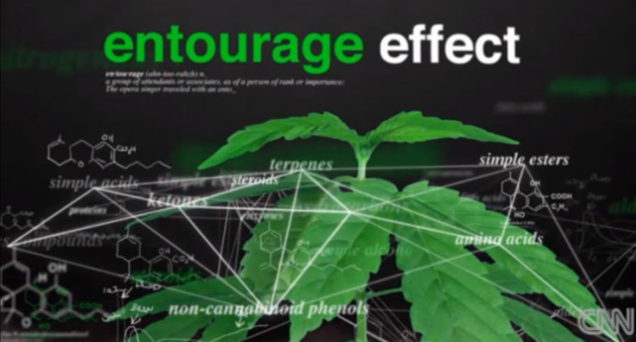 What is the 'Entourage Effect'?