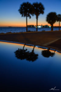 Palm Tree Reflection
