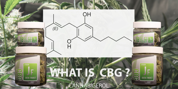 CBG The Mother Cannabinoid