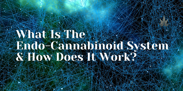 Learn How Your Endo-Cannabinoid System Works