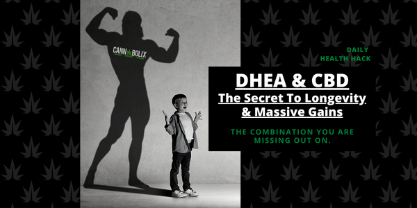 DHEA & CBD THE SECRET TO LONGEVITY & MASSIVE GAINS CANNABOLIS