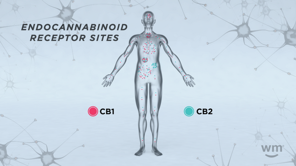 What Are Cannabinoid Receptors?