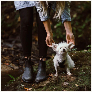 Lifestyle image of woman wearing Blundstone 558 Pull on boots in black. The photo shows her feet and legs and arms from the front. She is bending over holding the ears of a tiny white dog. They are standing next to a river.