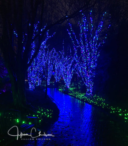 Lewis Ginter Botanical Gardens wooded path lit by Christmas lights