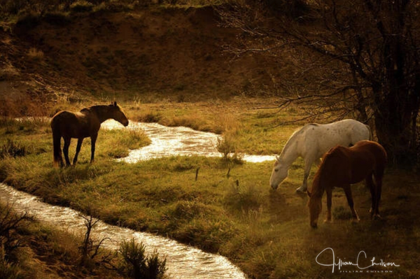Horses standing by a stream of water at the morning starts