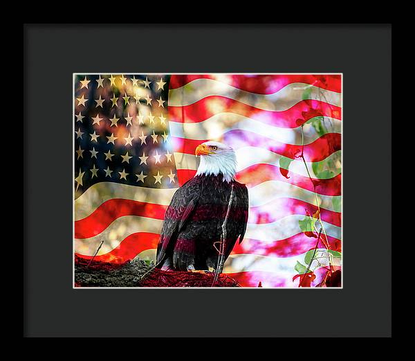 American Eagle - Framed Print