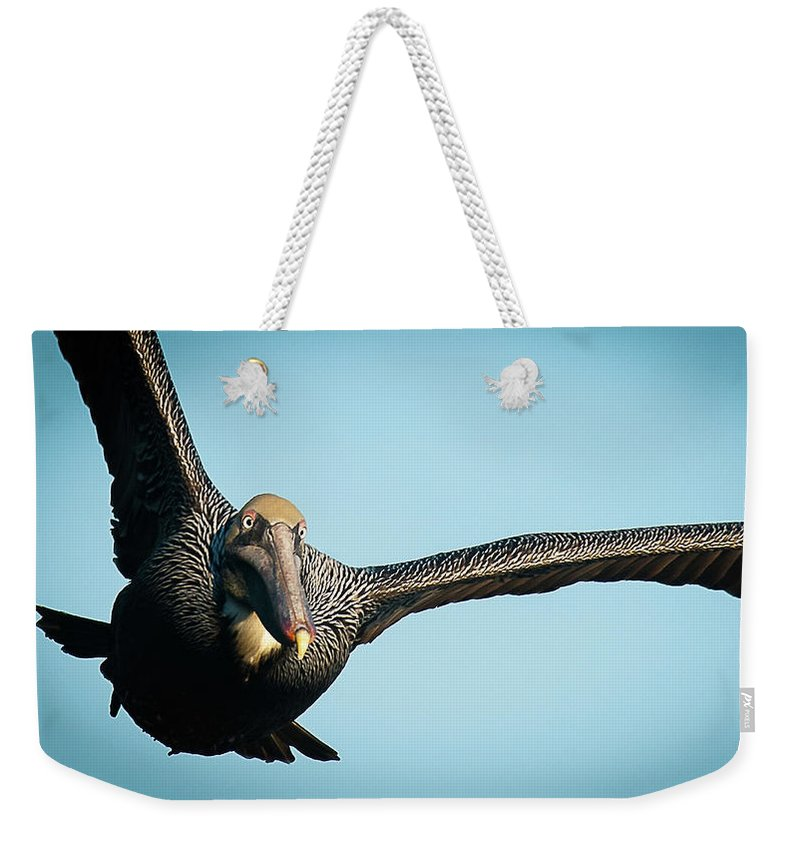 Brown Pelican In Flight - Weekender Tote Bag