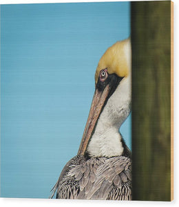 Brown Pelican Profile - Wood Print