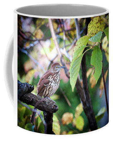 Brown Thrasher In A Tree - Mug