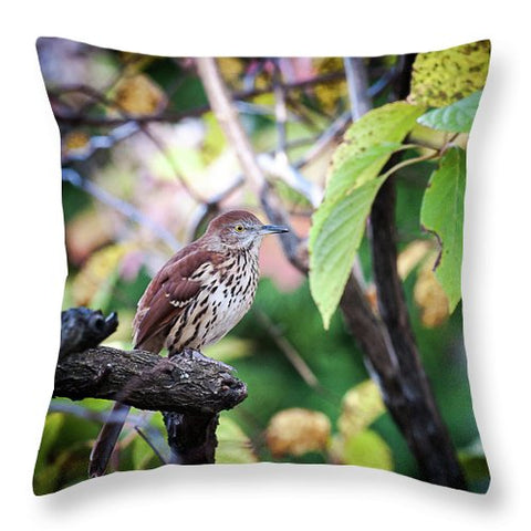 Brown Thrasher In A Tree - Throw Pillow