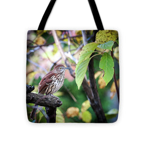 Brown Thrasher In A Tree - Tote Bag