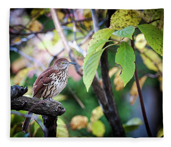 Brown Thrasher In A Tree - Blanket