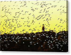 Chincoteague Lighthouse Surrounded By Snow Geese - Canvas Print