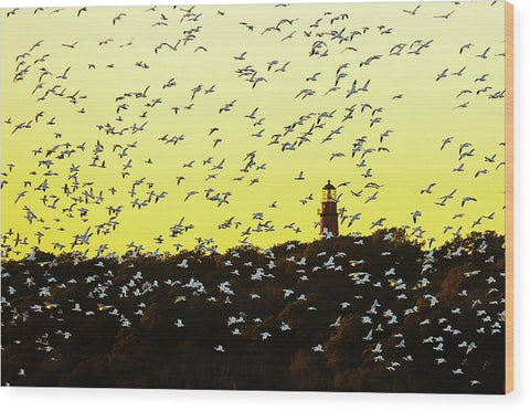 Chincoteague Lighthouse Surrounded By Snow Geese - Wood Print