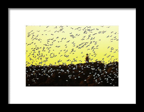 Chincoteague Lighthouse Surrounded By Snow Geese - Framed Print