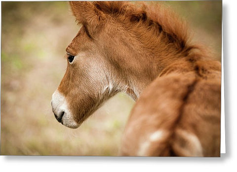 Chincoteague Pony Foal - Greeting Card