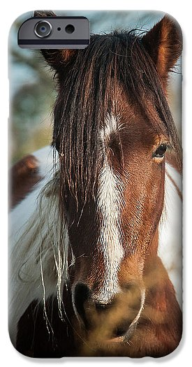 Chincoteague Wild Pony Portrait - Phone Case