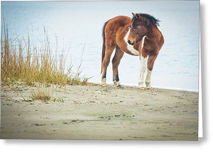 Chingoteague Pony On The Beach - Greeting Card