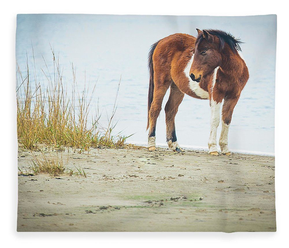 Chingoteague Pony On The Beach - Blanket