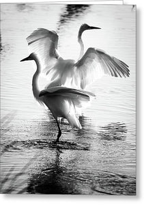Dancing Egrets - Greeting Card