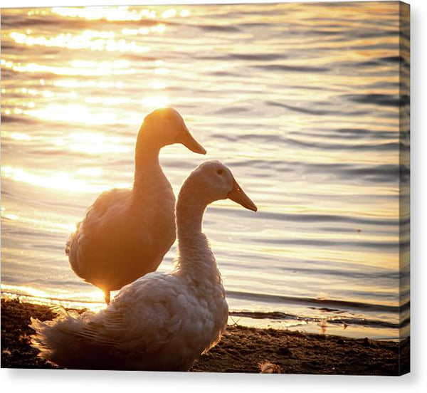 Ducks at Sunset - Canvas Print