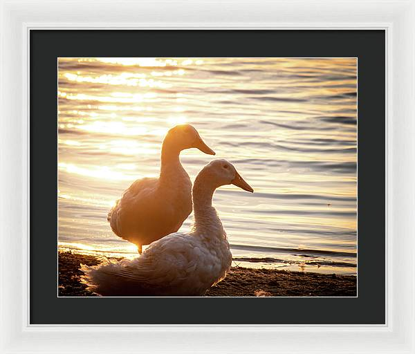 Ducks at Sunset - Framed Print